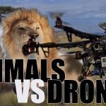 ドローンは動物の天敵!?動物保護におけるドローンの可能性