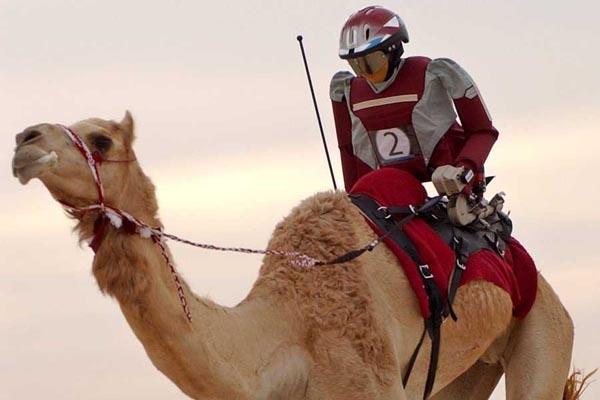 Robots-Camel-Racing-ロボットラクダレース