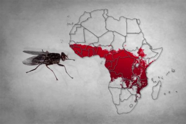 エチオピア_感染病をドローンで撲滅