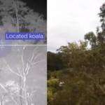 気候分析・鳥生態調査・森林伐採…環境保全に活用される人工知能