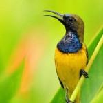 気候分析、鳥生態調査、森林伐採…環境保全に活用される人工知能