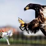 オランダ警察「ワシから逃げられたドローンは皆無」...導入に本気