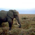 WWFとグーグルの「ドローン密猟監視」が暗礁か...見つけても逮捕できず