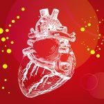 AIは心臓専門医を超えられるか…ディープラーニングで超音波画像を分類