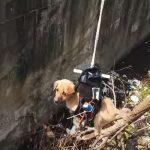 インドのエンジニアが排水溝に落ちた犬をドローン&ロボットアームで救出