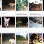野生動物の保護・観察に人工知能を導入...タンザニア・セレンゲティ国立公園
