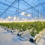 お題はミニトマトの遠隔栽培  最強の農業AIを決める大会がオランダで開催