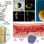 がん細胞に薬物を投与する超小型ロボット「マイクロローラーズ」...独・マックスプランク研究所
